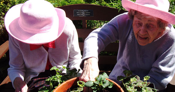 570x300-Planting-Pots